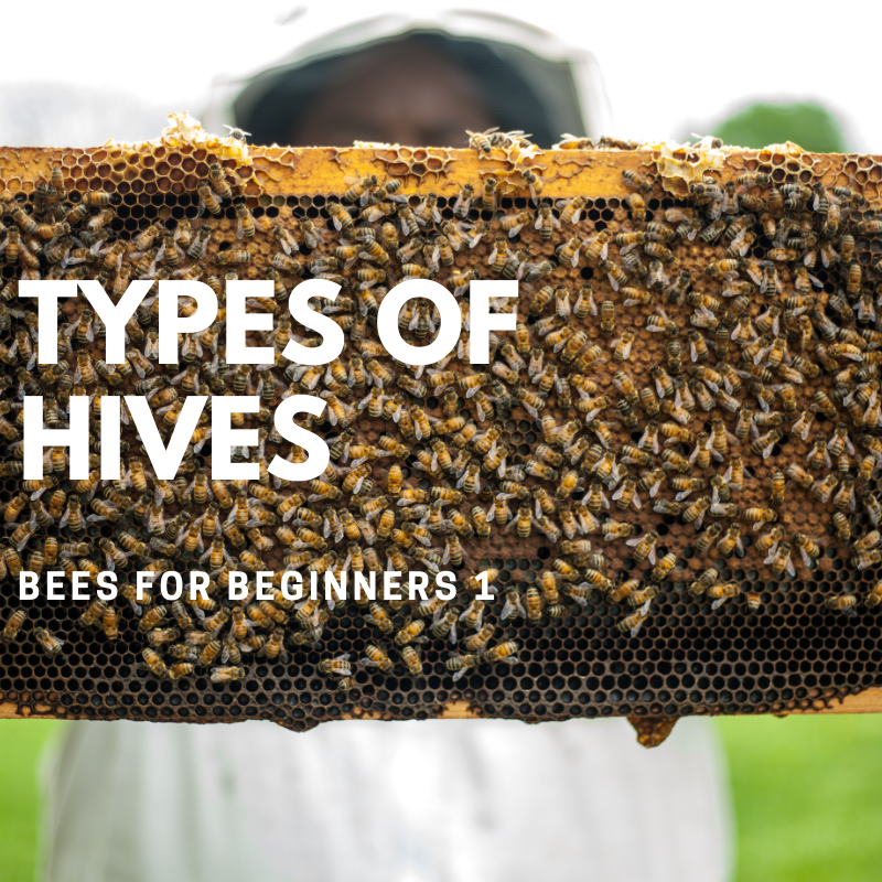 Bees4Beginners 1: Types of Hives